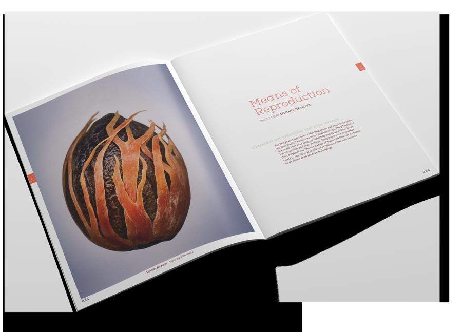 iota magazine spread showing a nutmeg seed